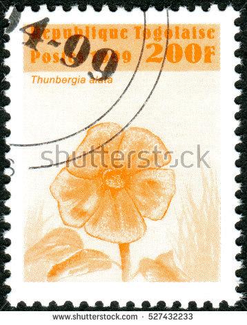 Thunbergia Alata Stock Images, Royalty.