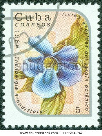 Thunbergia Grandiflora Lizenzfreie Bilder und Vektorgrafiken.