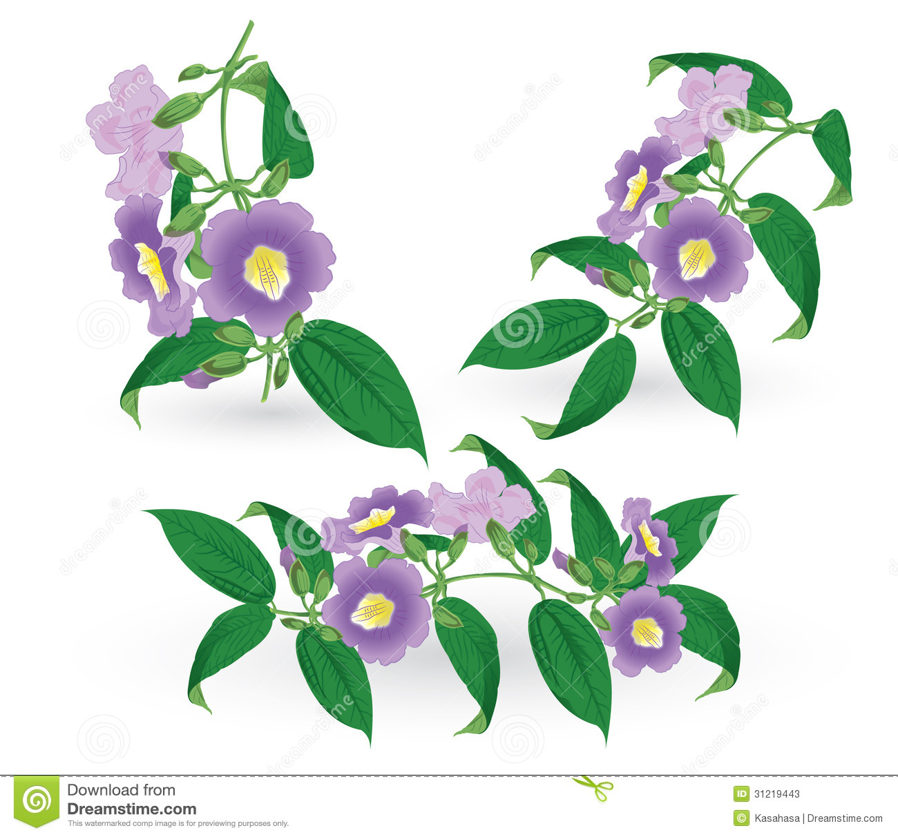 Thunbergia Stock Photos, Images, & Pictures.