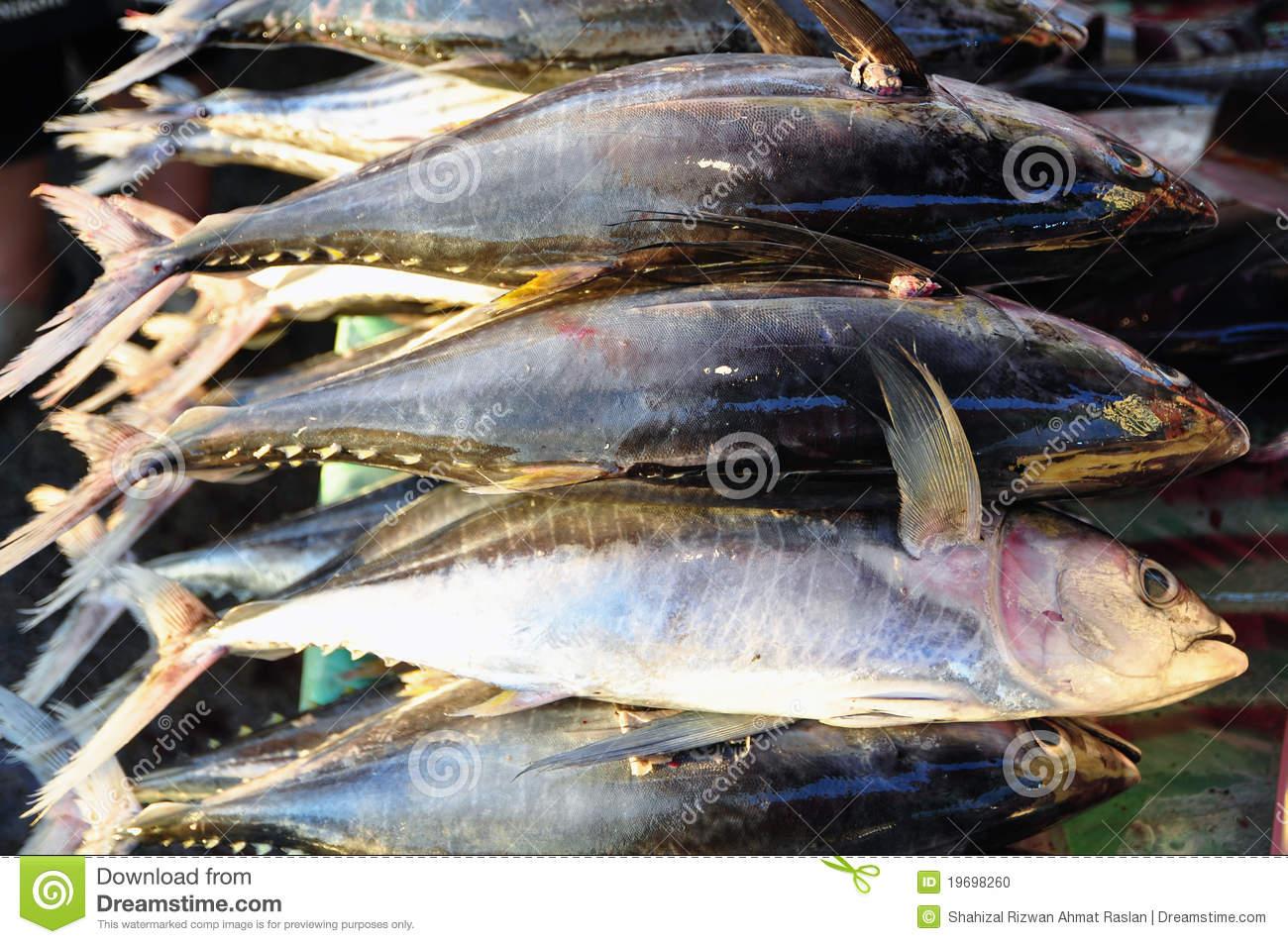 Fresh Tuna (Thunnus Albacares) Stock Photo.
