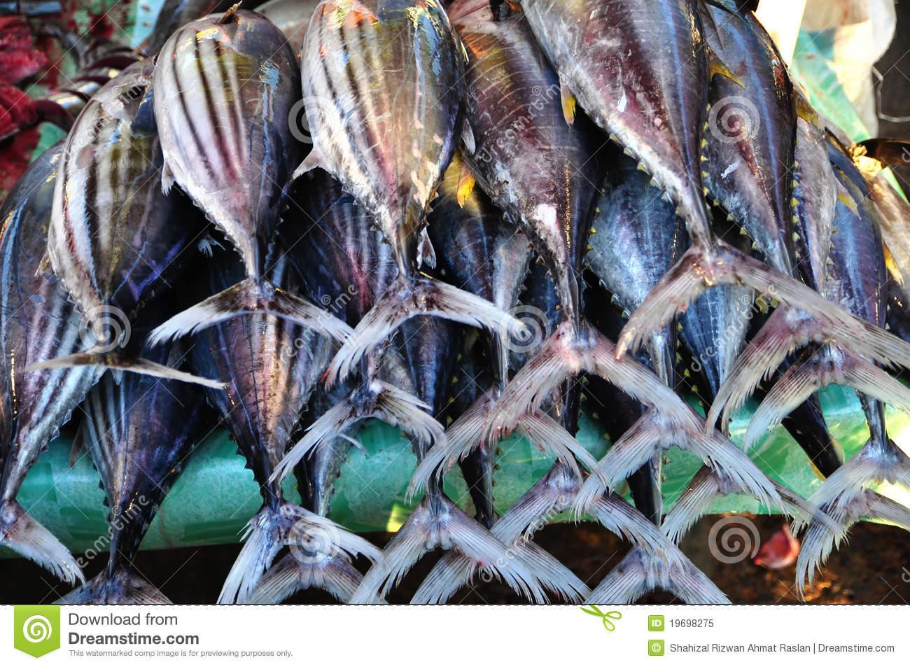 Fresh Tuna (Thunnus Albacares) Royalty Free Stock Photo.