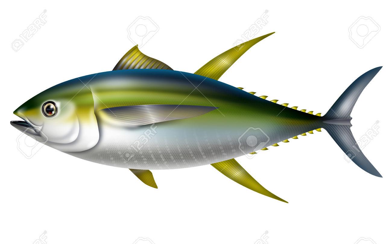 Illustration Of Yellowfin Tuna.Thunnus Albacares. Stock Photo.