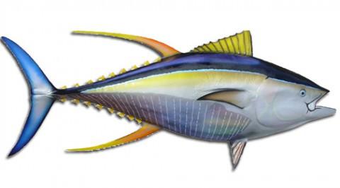 Yellowfin Tuna.