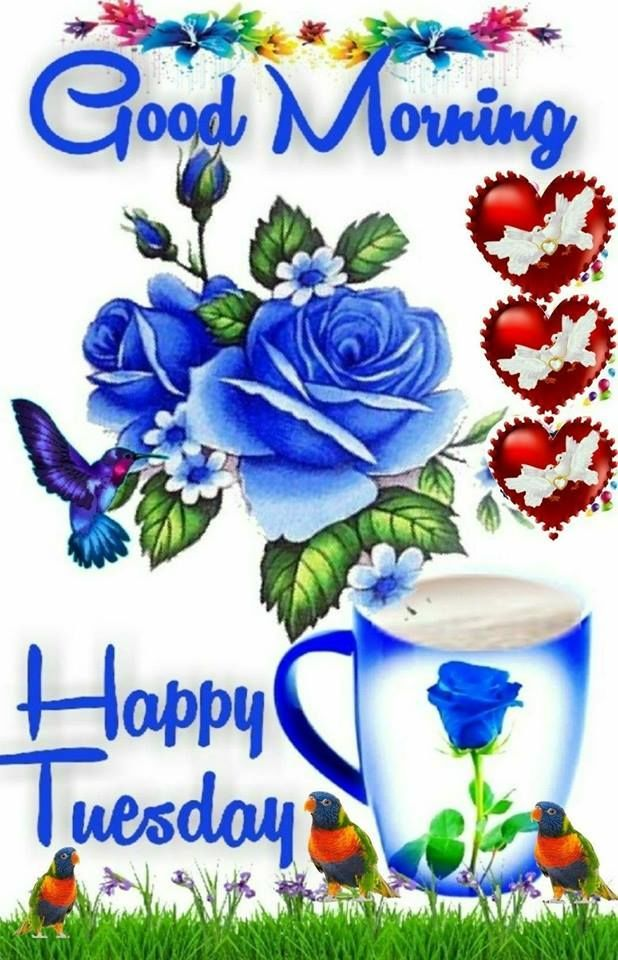 LoveThisPic offers Parrot & Hummingbird Good Morning Happy.