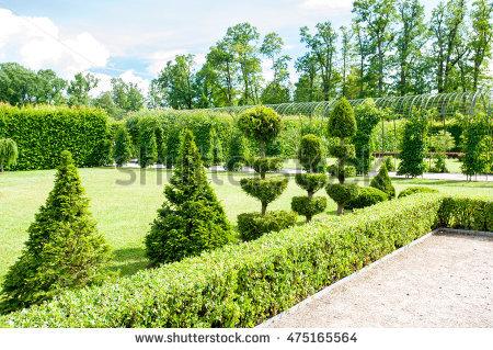 Thuja Garden Stock Photos, Royalty.