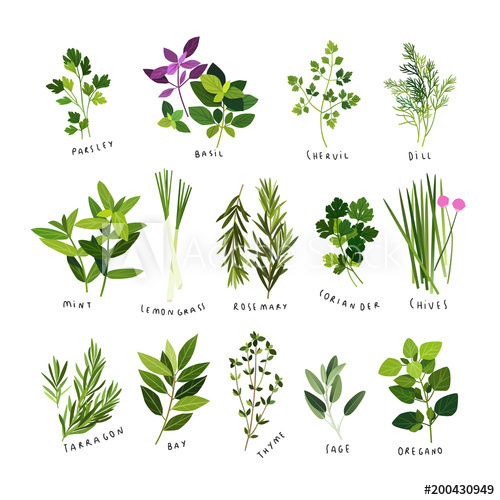 Clip art illustrations of herbs and spices such as parsley.