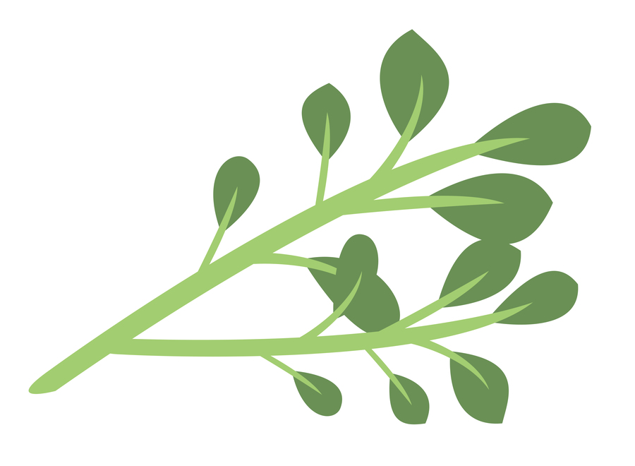 Leaf, Green, Plant, Tree, Grass, Product, Graphics png.