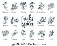 Wild Thyme Clip Art.