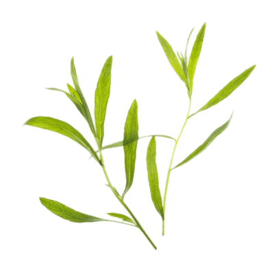 Thyme transparent PNG.