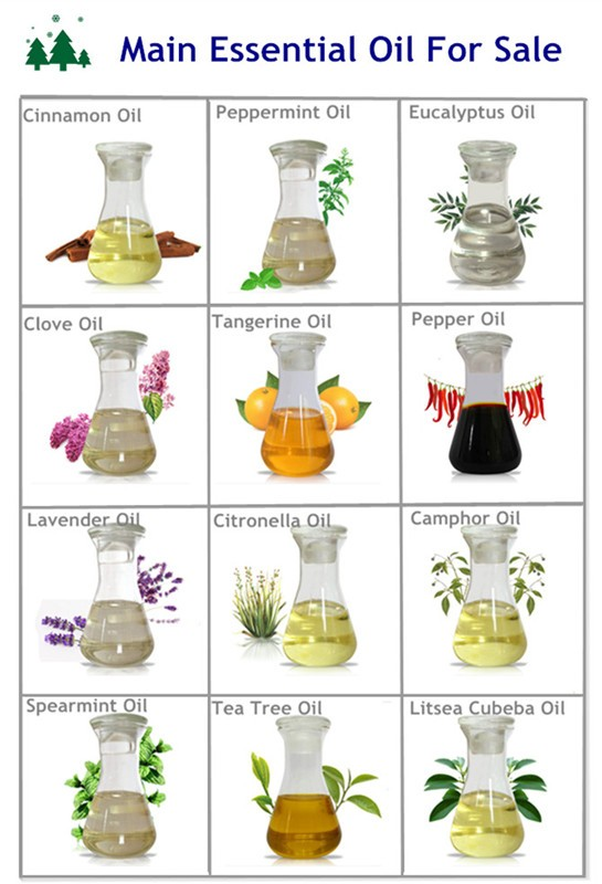 Herbal Products Wholesale Supply Thyme Extract Thymol.