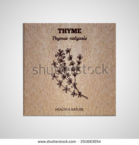 Thymus Vulgaris Stock Vectors & Vector Clip Art.