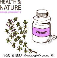 Thymus vulgaris Clipart Royalty Free. 14 thymus vulgaris clip art.