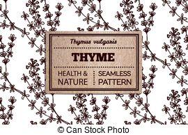 Thymus vulgaris Vector Clip Art EPS Images. 15 Thymus vulgaris.