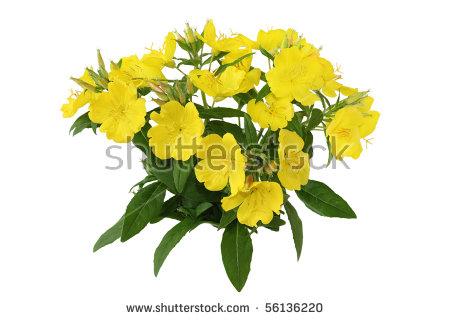 "perennial Flowering Plants"" Stock Photos, Royalty."
