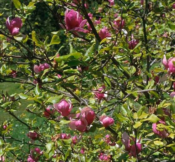 Natural Gardening: Spring in the Southeastern U.S..