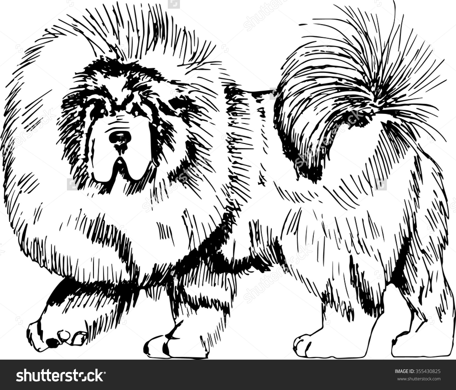 Tibetan Mastiff Dog Vector Illustration Hand Stock Vector.