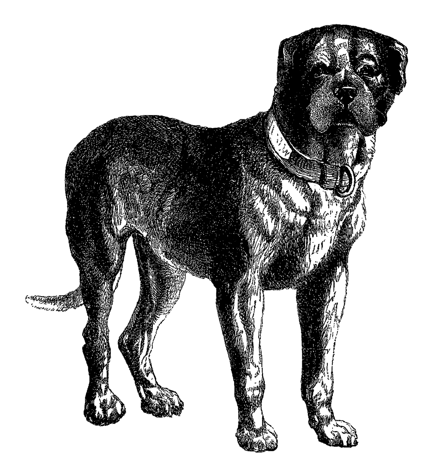 Clipart black mastiff dog.