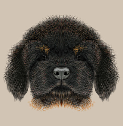 Tibetan Mastiff Clip Art, Vector Images & Illustrations.