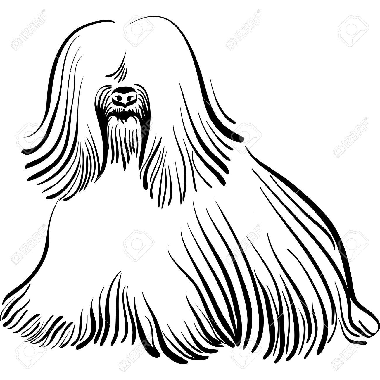 Sketch Of The Dog Tibetan Terrier Breed Sitting Royalty Free.