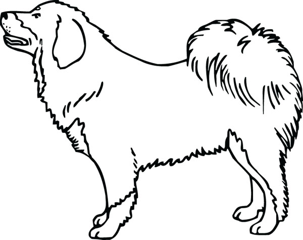 Tibetan Mastiff Dog Clip Art For Custom Pet Memorial Gifts.