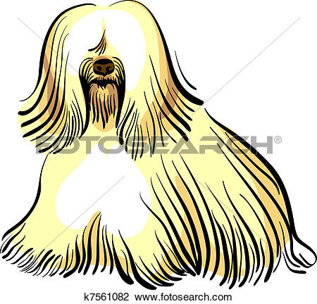 Clipart of vector dog Tibetan Terrier breed k7561082.