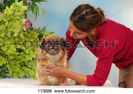 Pictures of dog, tibetan, spaniel, human 113688.