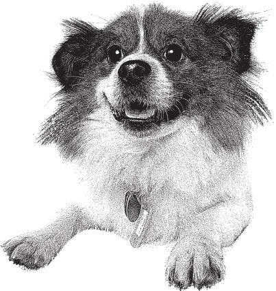 Tibetan Spaniel Clip Art, Vector Images & Illustrations.