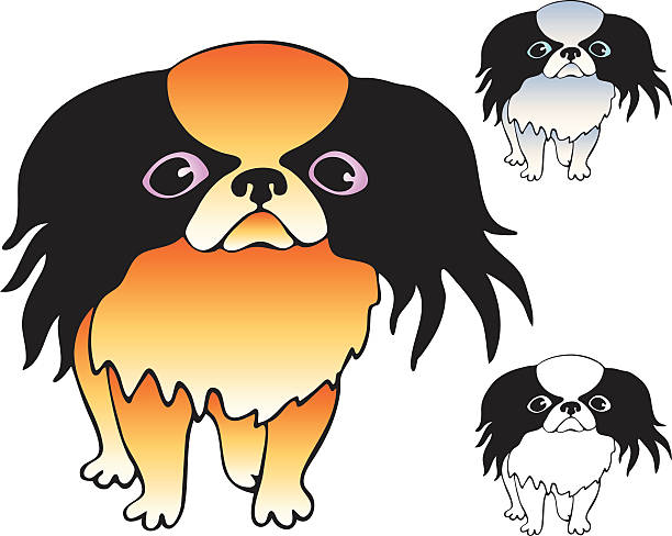 Tibetan Spaniel Clip Art, Vector Images & Illustrations.
