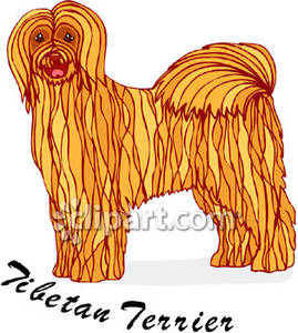 Labeled_Tibetan_Terrier_Royalty_Free_Clipart_Picture_090127.