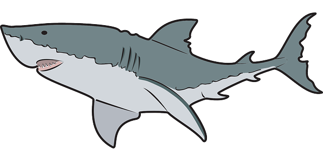Shark Clip Art For Kids.