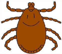 Tick clipart 20 free Cliparts | Download images on ...