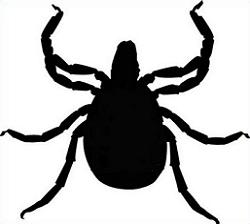 Free Tick Clipart.
