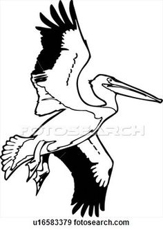 Pelican Pen and Ink Drawing.