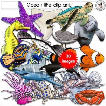 Marine, Ocean, Sea, Fish, Underwater and Tidepool Realistic Clip Art.