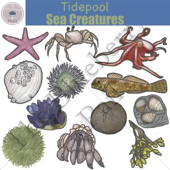 Tidepool Sea Creatures Clip Art Set.
