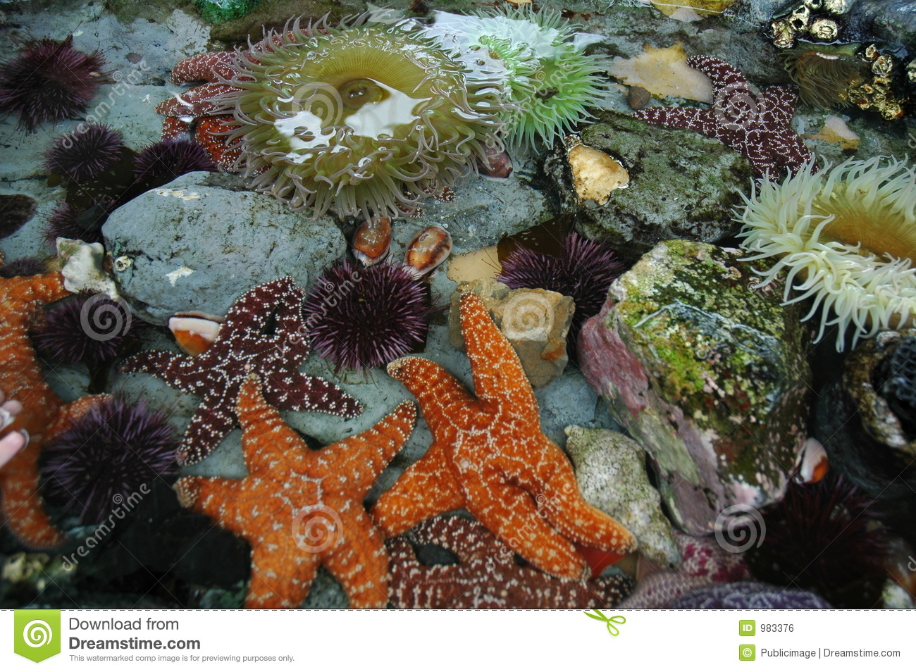 Tide Pool Animals Royalty Free Stock Image.