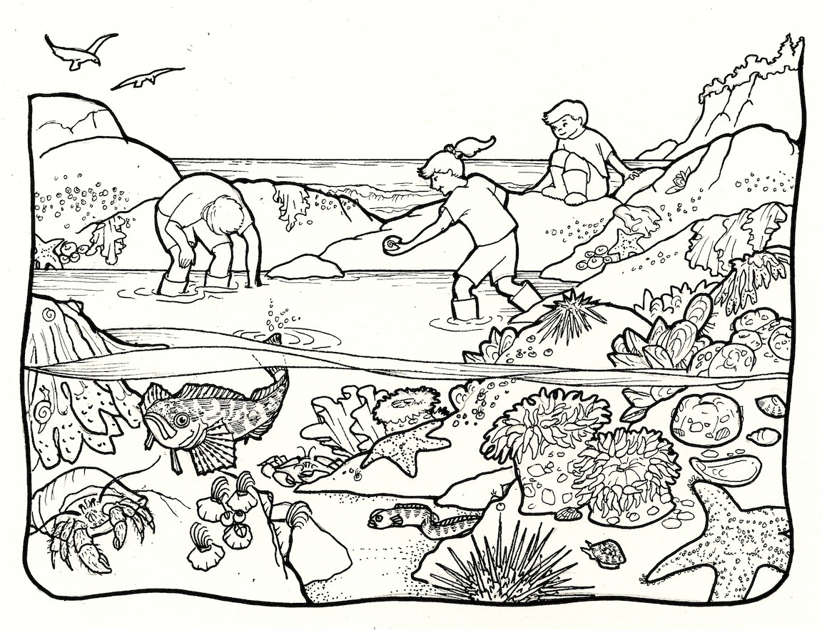 rockpool creatures coloring pages - photo#2