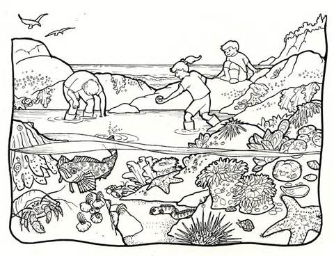 Tide Pool Coloring Pages Printable Coloring Pages.