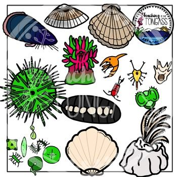 Tide Pool Clipart.