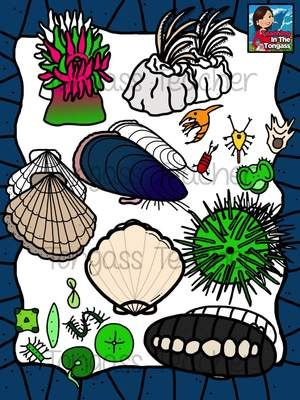Tidepool Clipart Bundle from tongassteacher on.