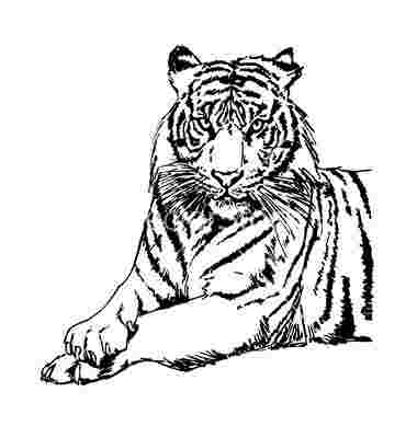 Best Cliparts: Tiger Playing Sports Clipart Black Tiger.
