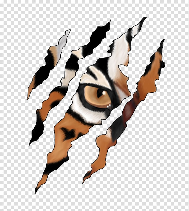 Tiger eye, Tiger Claw Cheetah , tiger transparent background.