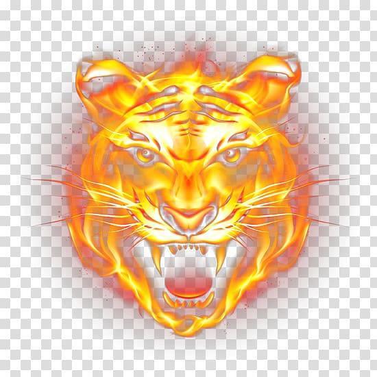 Tiger Fire Flame, HD tiger fierce flames, tiger flame.