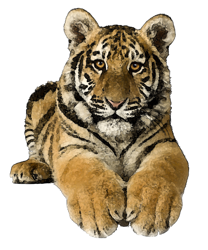 tiger clipart 10.