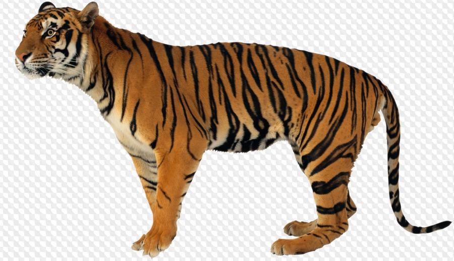 45 PNG, Lion, Tiger, Panther, Wolf, Jaguar, Predatory, animals.