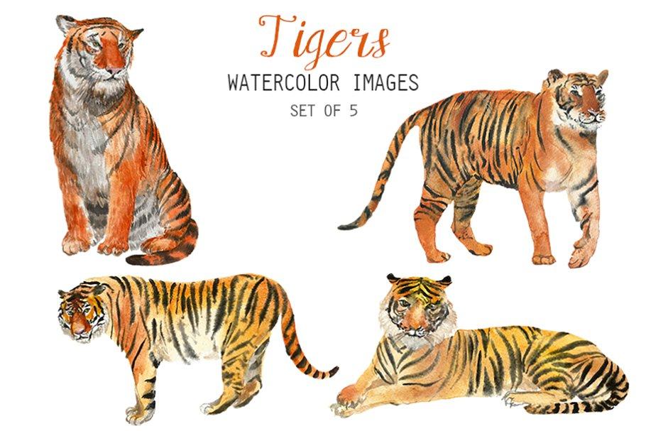 Watercolor Tigers Clipart.
