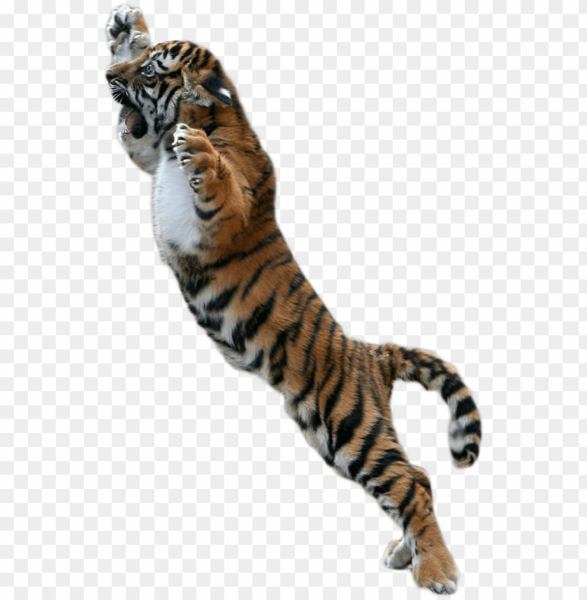 baby tiger png picture free download.