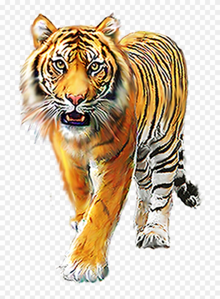 Cartoon Tiger, Background Images For Editing, Picsart.