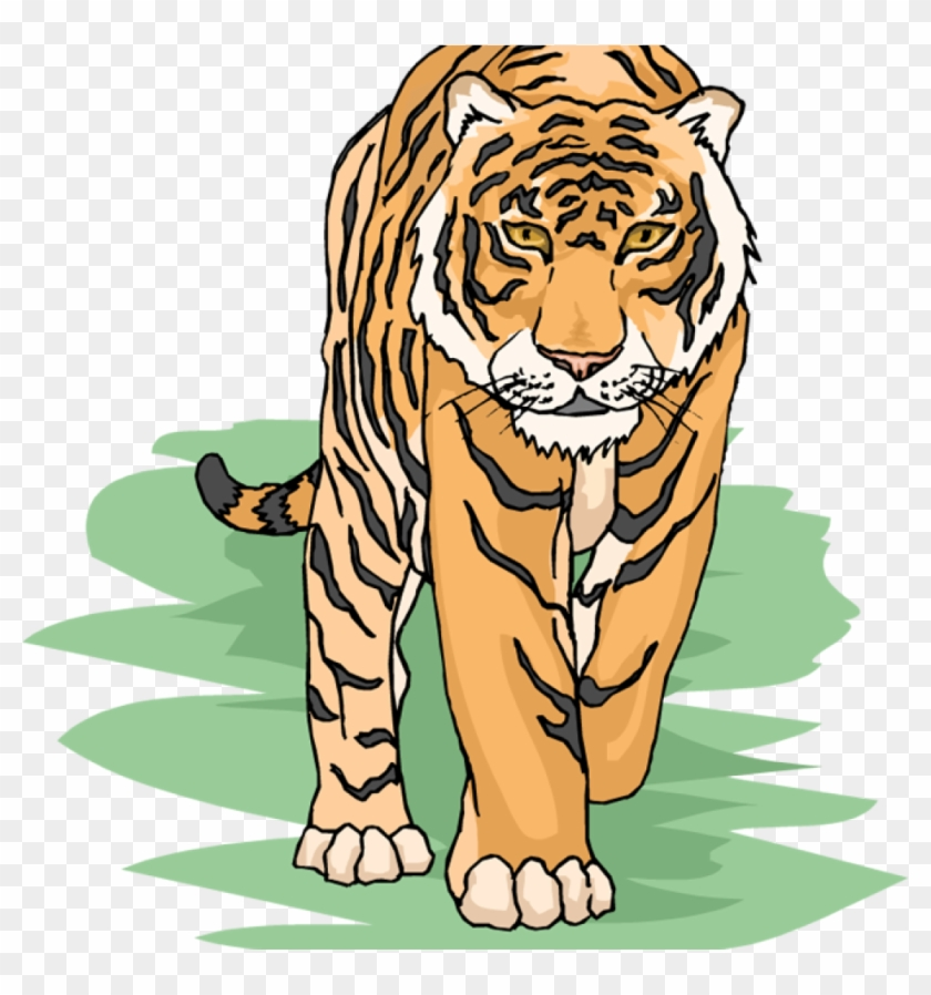 Free Tiger Clipart For Teachers.