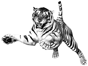 tiger clipart transparent Clipground